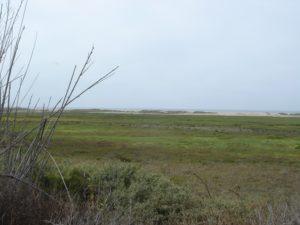 Marsh land near the coast