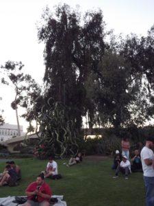 crazy cactus bush in the park