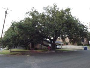 Pam under the giant oak tree