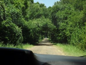 More of the old trail original road