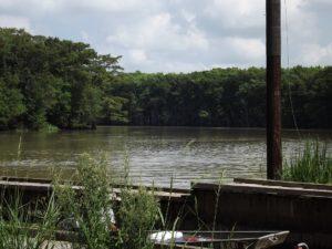 Mermentau river