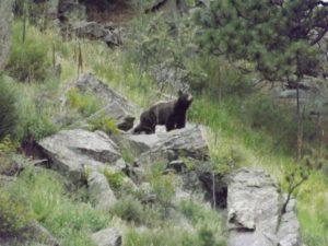 Bear!!!
