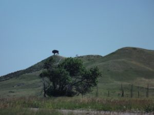 giant buffalo on the hill