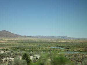 river marsh area